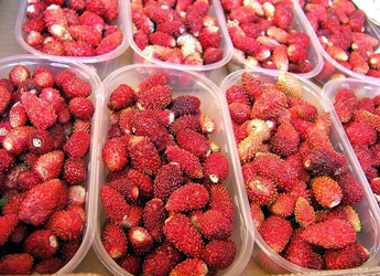 wild strawberries at the market