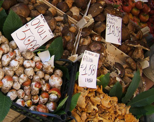 A cornucopia of fresh mushrooms in an italian market